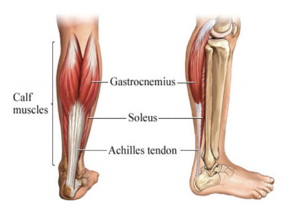 Treatment Guide for Achilles Tendinopathy